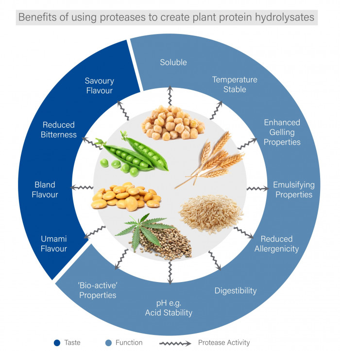 Benefits of using proteases to create plant protein hydrolysates