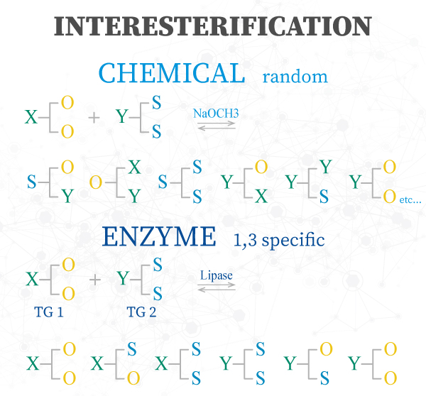 enzyme-manufacturing