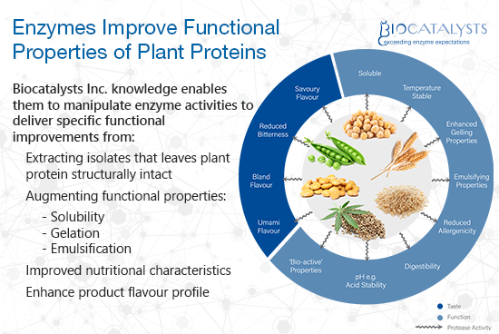 Plant Proteins Infographic